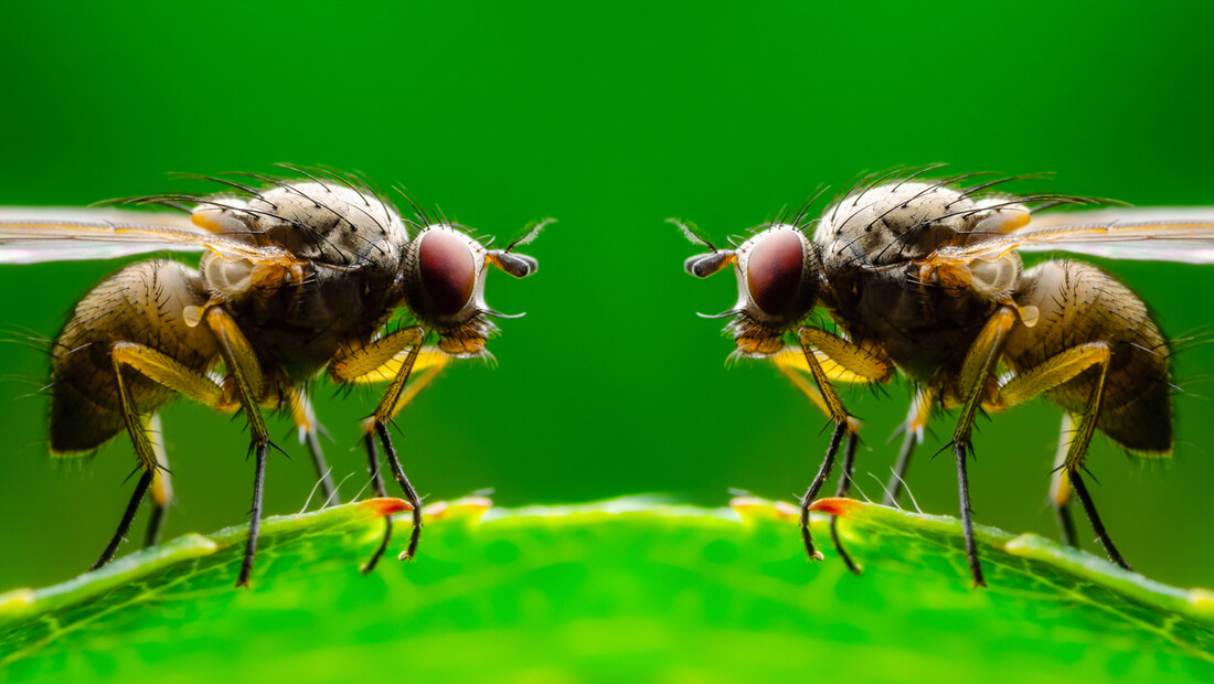 What Fruit Flies Can Teach Us About Love