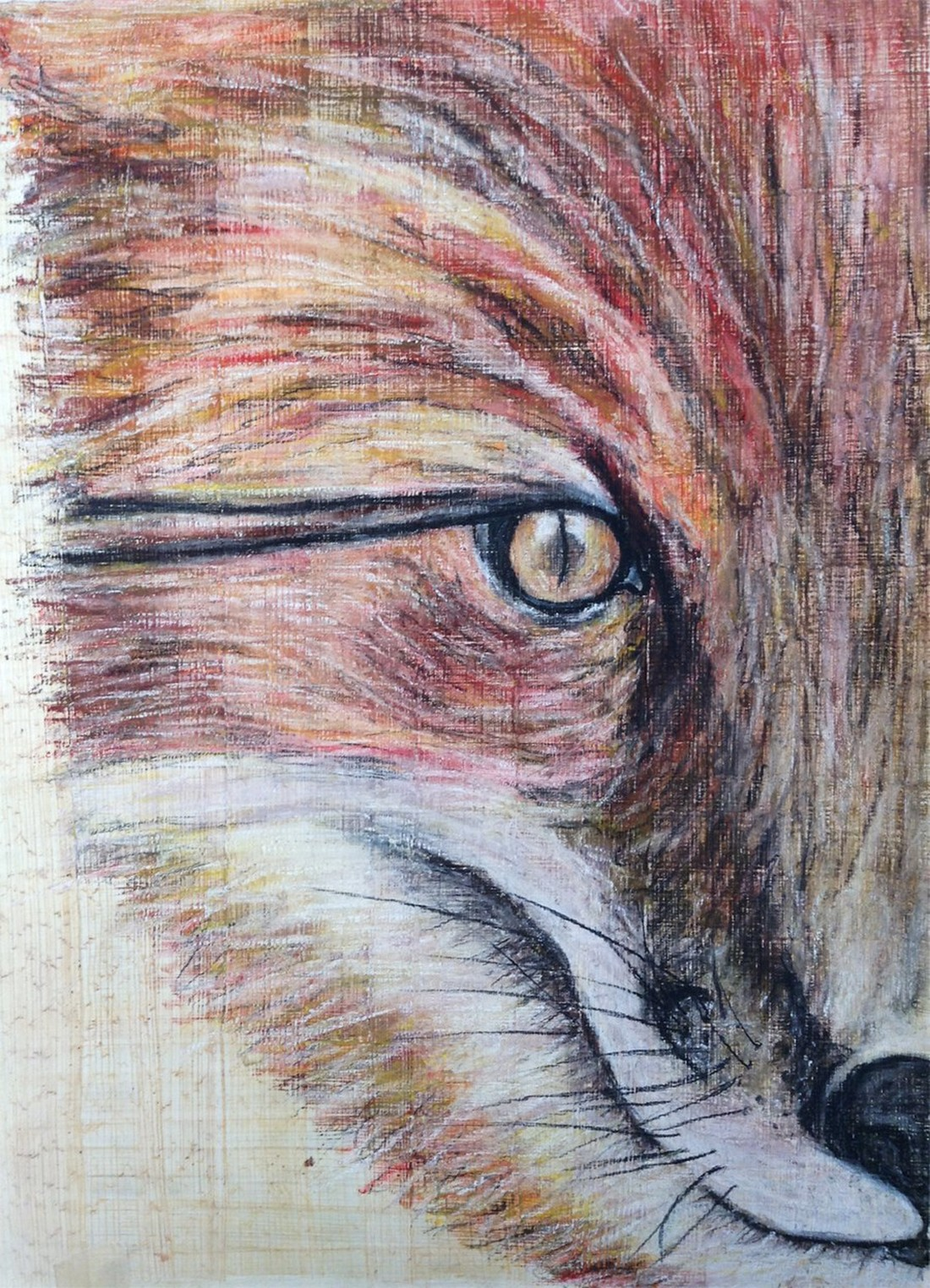 Portrait-of-a-Fox.jpg