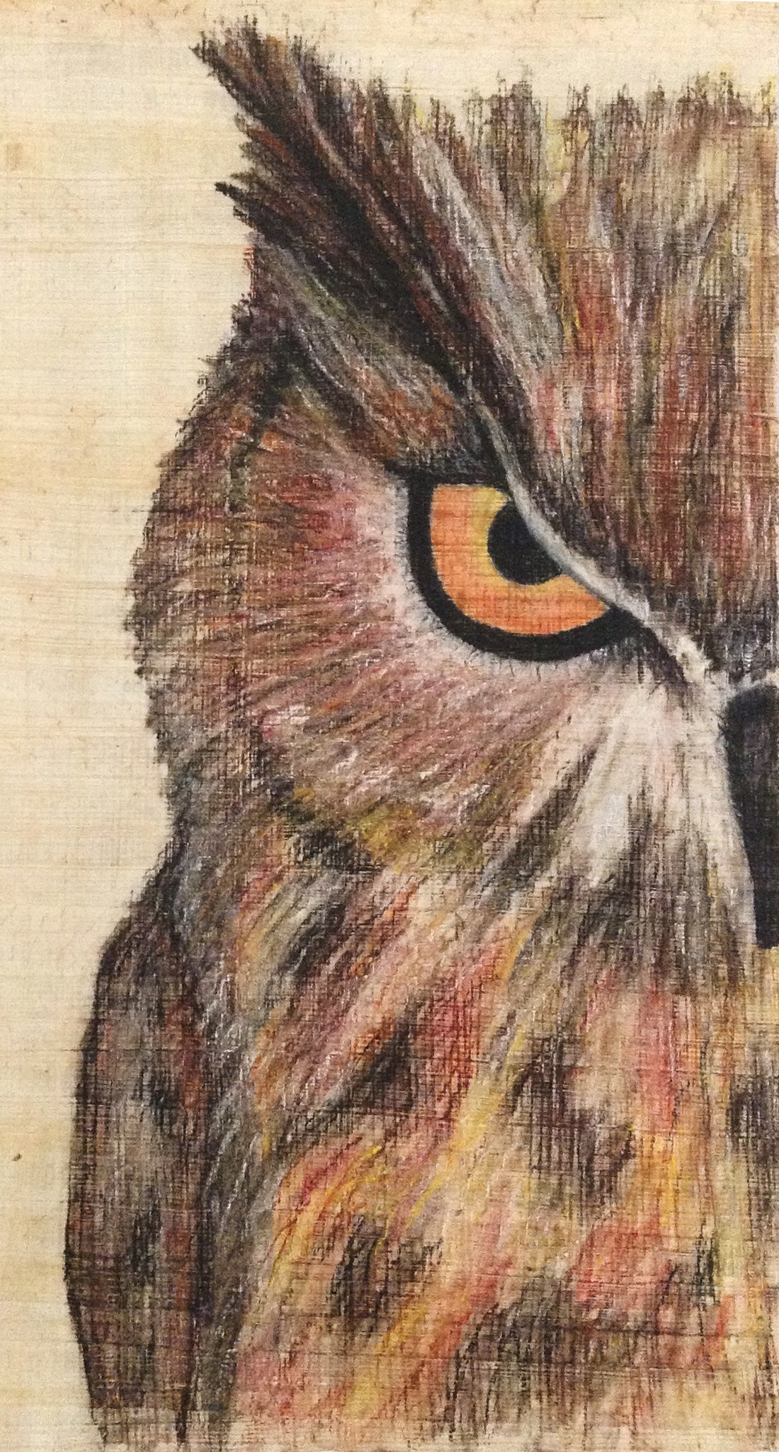 Portrait-of-an-Owl.jpg