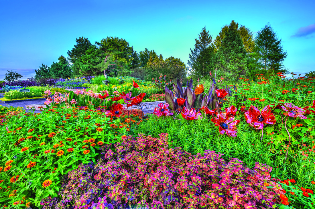 Image of flowers in bloom at the Minnesota Landscape Arboretum