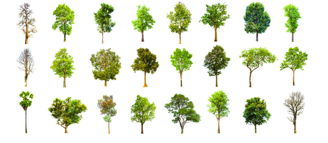 Rows of different types of trees