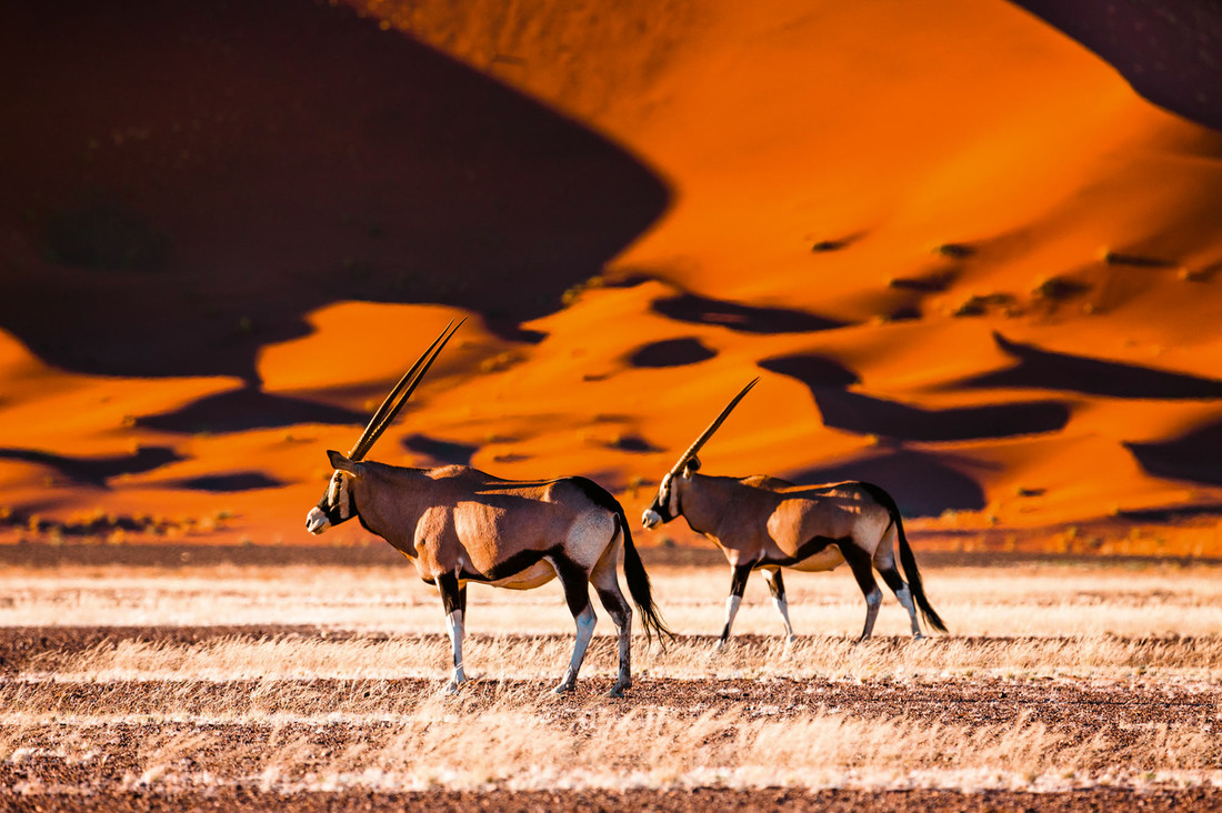 Namibia's Natural Wonders
