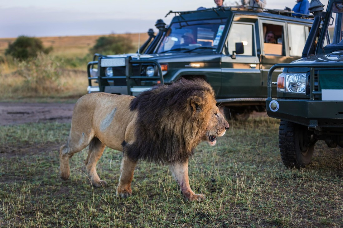 The Airbnb for Safaris